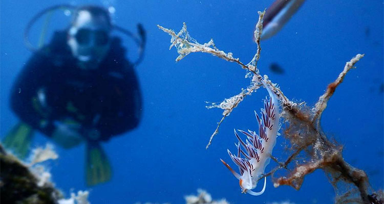 Discover Scuba Diving in Sithonia